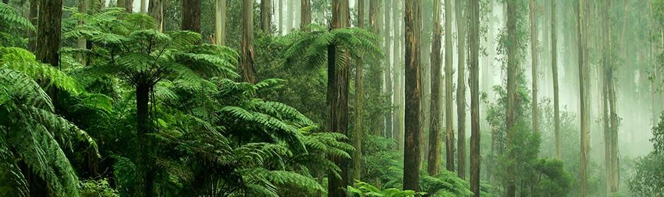Bäume und Farne im tropischen Regenwald.