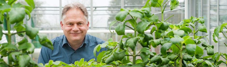 Michael Straub steht hinter einer Pflanze in einem Gewächshaus.